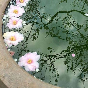 Flowers in a pond of dreams